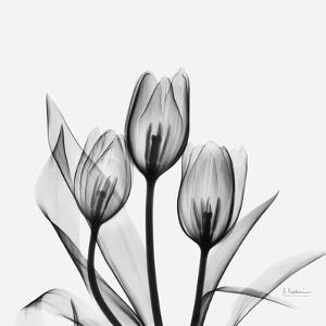 Tulips Greys 3 by Albert Koetsier