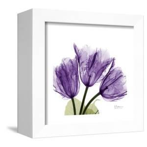 Tulips L63 by Albert Koetsier