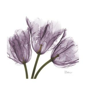 Tulips Lavender by Albert Koetsier