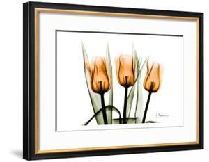 Tulips Orange by Albert Koetsier