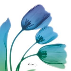 Tulips Turq Blue by Albert Koetsier