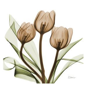 Tulips by Albert Koetsier