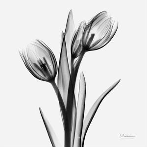 Tulips by Albert Koetsier