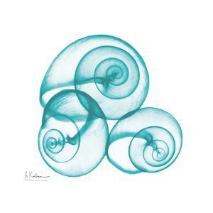 Turquoise Sky Snails by Albert Koetsier