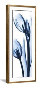 Two Blue Tulips by Albert Koetsier