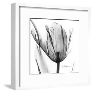 Two Tulips in Black and White by Albert Koetsier