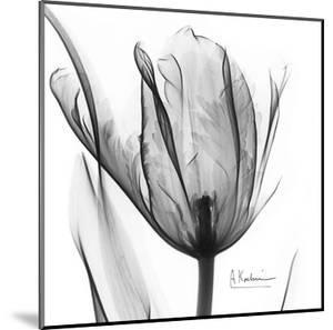 Two Tulips in Black and White by Albert Koetsier