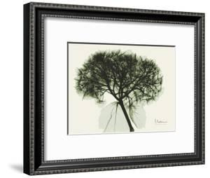 Verduous Hydrangea by Albert Koetsier