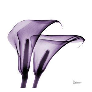 Violet Calla Twins II by Albert Koetsier