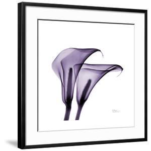 Violet Calla Twins II by Albert Koetsier