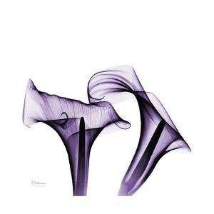 Violet Calla Twins by Albert Koetsier