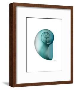 Water Snail 2 by Albert Koetsier