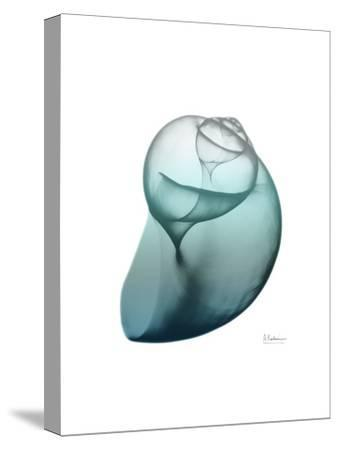 Water Snail 3
