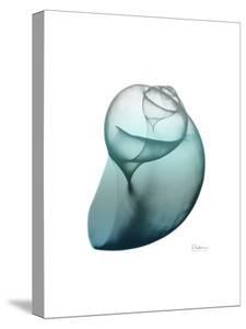 Water Snail 3 by Albert Koetsier