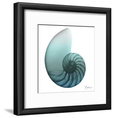 Water Snail 4