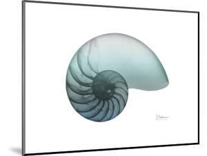 Water Snail 4 by Albert Koetsier