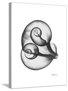 Water Snail Shell Gray by Albert Koetsier