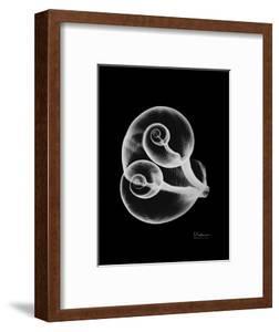 Water Snail Shell Xray by Albert Koetsier