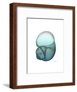 Water Snail by Albert Koetsier