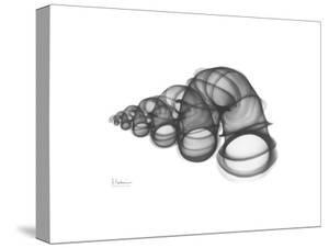 Wentle Trap by Albert Koetsier