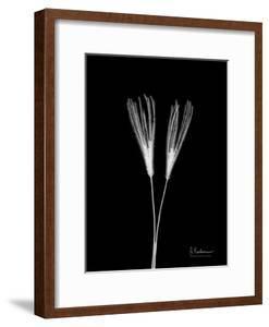 Wild Grass 1 by Albert Koetsier