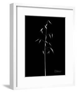 Wild Grass 5 by Albert Koetsier