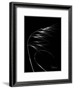 Wild Grass 7 by Albert Koetsier
