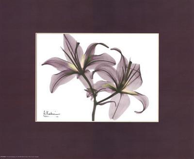 X-Ray Blackberry Lillies by Albert Koetsier