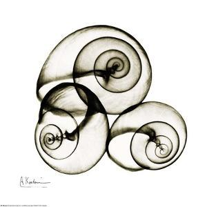 X-ray Snail Shells, Sepia by Albert Koetsier