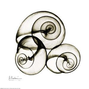X-ray Snail Shells, Sepia by Albert Koetsier