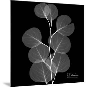 Xray Eucalyptus by Albert Koetsier
