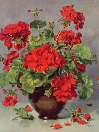 Geranium in an Earthenware Vase