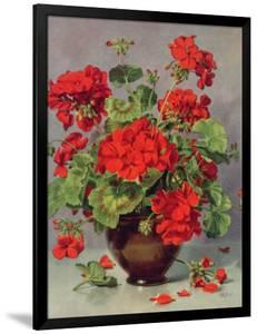 Geranium in an Earthenware Vase by Albert Williams