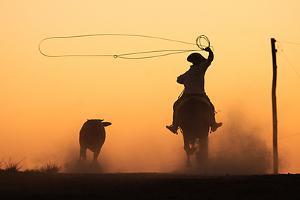 Rodeios at Sunset by Alberto BN Junior