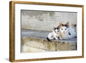 Two Cats on Stone Steps by Alberto Coto