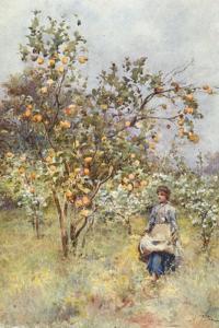 Lemon-Trees: Spring by Alberto Pisa