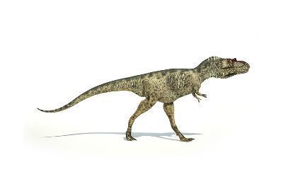 Albertosaurus Dinosaur on White Background--Art Print