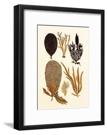 Algae, Black Coral, Cabinet of Natural Curiosities