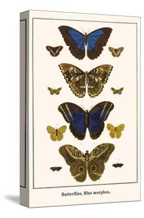 Butterflies, Blue Morphos,