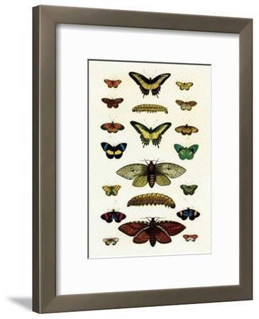 Butterflies, Moths and Caterpillar