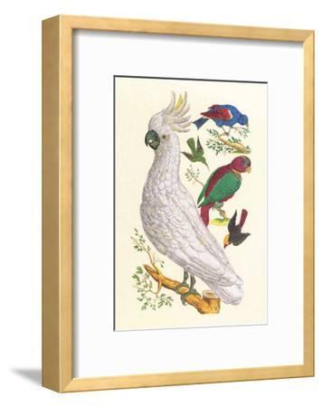 Cockatoo, Parrot, Blackbird & Hummingbird