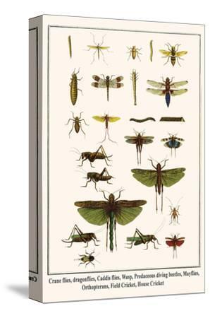 Crane Flies, Dragonflies, Caddis Flies, Wasp, Predaceous Diving Beetles, Mayflies, etc.