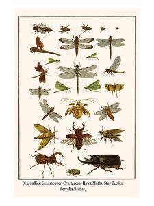 Dragonflies, Grasshopper, Crustacean, Hawk Moths, Stag Beetles, Hercules Beetles, by Albertus Seba