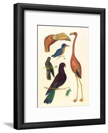 Flamingo, Pigeons, Doves & Kingfisher (1734-1765)