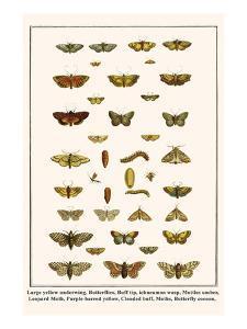 Large Yellow Underwing, Butterflies, Buff Tip, Ichneumon Wasp, Mottles Umber, Leopard Moth, etc. by Albertus Seba