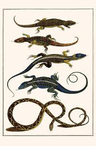 Lizards and Snakes by Albertus Seba