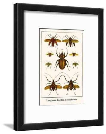 Longhorn Beetles, Cockchafers