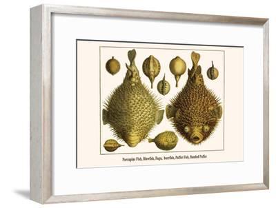 Porcupine Fish, Blowfish, Fugu, Burrfish, Puffer Fish, Banded Puffer