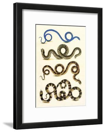 Sand Boa and Snakes, Cabinet of Natural Curiosities