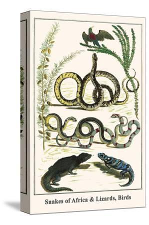 Snakes of Africa and Lizards, Birds